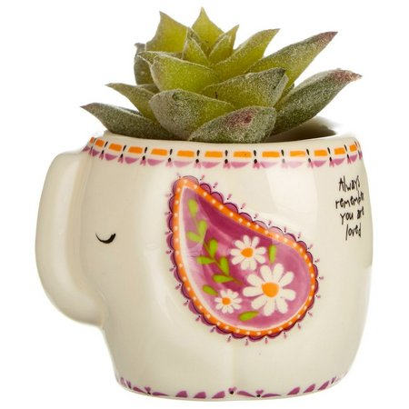 Natural Life Succulent Plant Elephant Pot