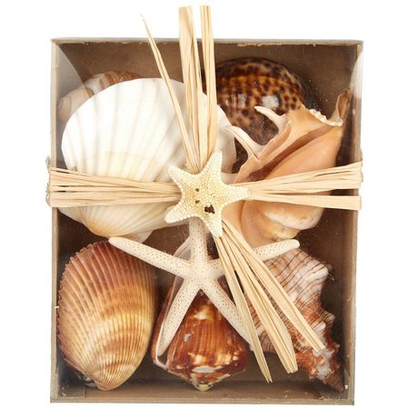 Fancy That Decorative Seashell Box