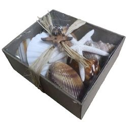 Fancy That Decorative Seashell Box