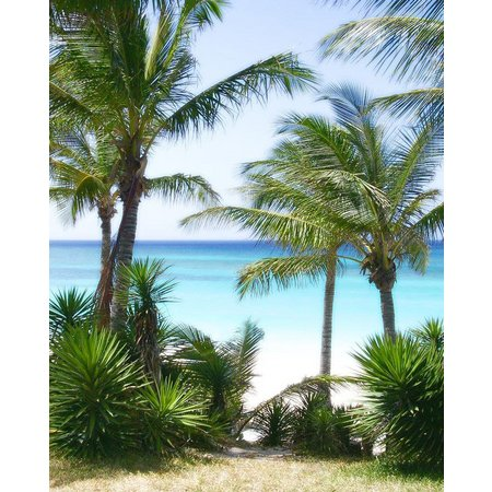 Palm Island Home Beach View Palm Wall Art