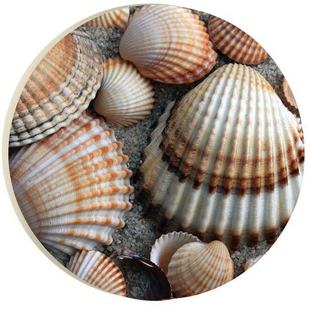 P. Graham Dunn Color Seashells Car Coaster
