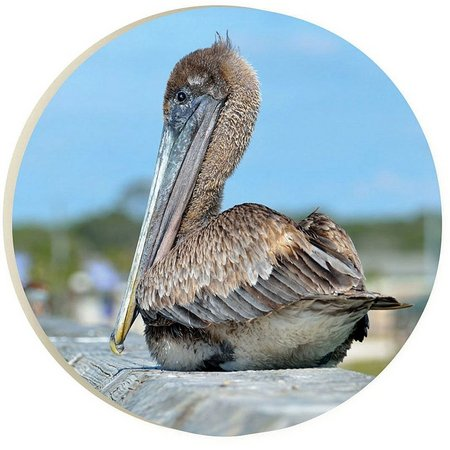 P. Graham Dunn Sitting Pelican Car Coaster