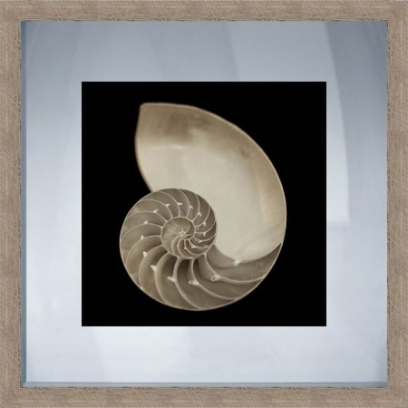 PTM Images Nautilus Shell Rustic Framed Wall Art