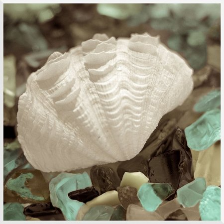 PTM Images Shell Sea Glass Wall Art