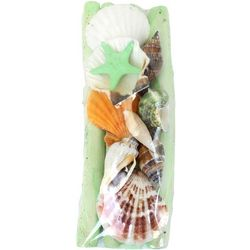 Beach Combers Decorative Sea Shell and Driftwood Pack