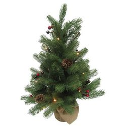Brighten the Season Florida Bealls 24'' Pre-Lit Tree