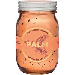 Modern Sprout Palm Tree Garden Jar Kit