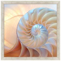Coastal Home Iridescent Nautilus Framed Wall Art