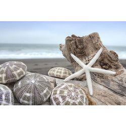 Palm Island Home Crescent Beach Shells Wall Art