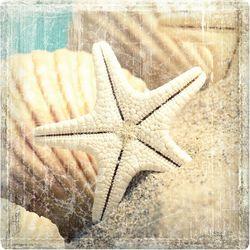 P. Graham Dunn Make A Wish Star And Shell Coaster