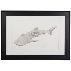 Linnea Szymanski 'Whale Shark' Original Drawing Framed Art
