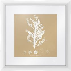 PTM Images Tan Sea Life I Framed Wall Art