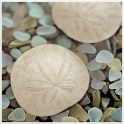 PTM Images Sand Dollar Sea Glass Wall Art