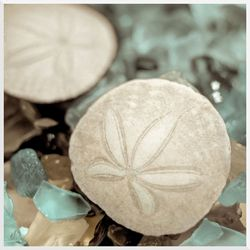 Sand Dollars Sea Glass Wall Art