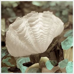 Shell Sea Glass Wall Art