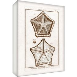PTM Images Pentagon Starfish Canvas Wall Art