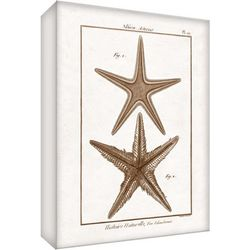 PTM Images Sea Starfish Canvas Wall Art