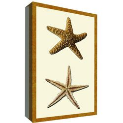 PTM Images Starfish Collection II Canvas Wall Art