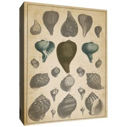 PTM Images Main Shells I Canvas Wall Art
