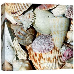 PTM Images Shells By The Sea I Canvas Wall Art