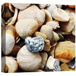 PTM Images Shells By The Sea II Canvas Wall Art