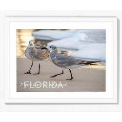 PTM Images Real Birds Framed Wall Art