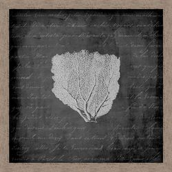 PTM Images Black & White Sea Fan II Wall Art