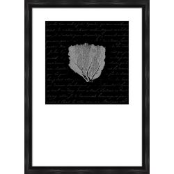 PTM Images Black & White Coral Framed Wall Art