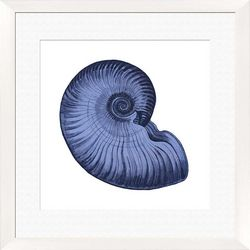 Sea Shell Framed Wall Art