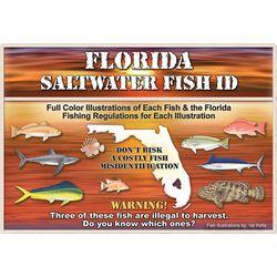 Saltwater Fishing ID Florida Saltwater Fish Book