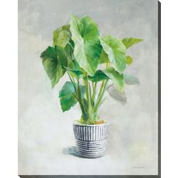 Streamline Art Greenhouse I Canvas Wall Art