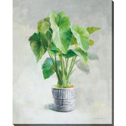 Greenhouse I Canvas Wall Art