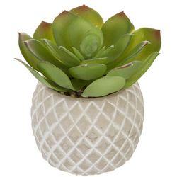 Flora Bunda 5'' Succulent Pineapple Decor