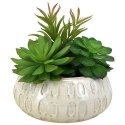 Siena Floral 7.5'' Succulent Potted Decor