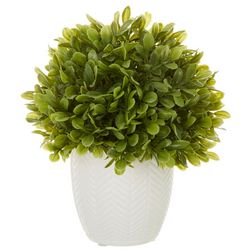 Siena Floral 7'' Boxwood Potted Decor
