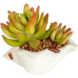 Coastal Home 4'' Shell Succulent Plant