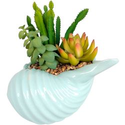 Coastal Home Blue Shell Pot Succulent Arrangement